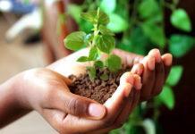 Устойчивое развитие - путь к решению экологических проблем