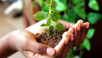 Устойчивое развитие — путь к решению экологических проблем