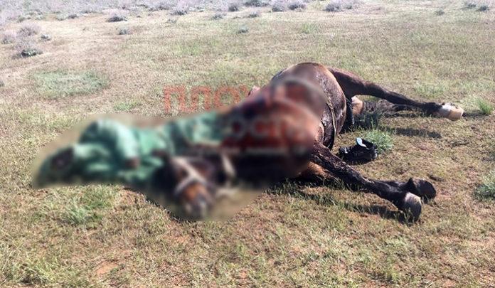 В Астраханской области молния убила пастуха и лошадь