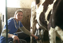 В Бессоновском районе стадо коров осталось без пастбища