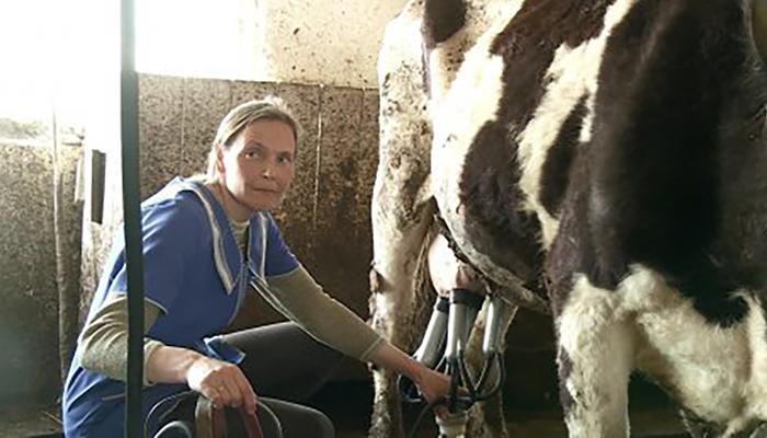 В Бессоновском районе стадо коров осталось без пастбища 😱 🎥