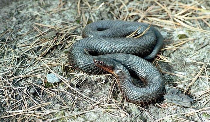В Курганской области нашествие змей после пожаров