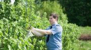 В Орловской и Курской областях объявили охоту на насекомых-вредителей