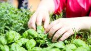 В Российской Федерации состоится открытие первого в стране тактильного сада