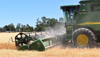 Аграрии Ставрополья лишатся до половины урожая из-за засухи
