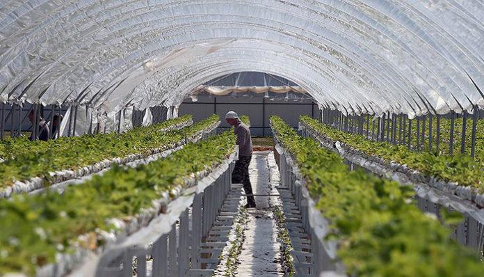 Агробизнес - технологии в цифрах