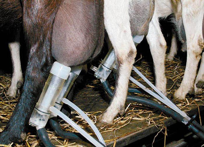 Доильный аппарат для коз (28 фото): мини-устройства и станки для дойки, ручное и электрическое оборудование для доения