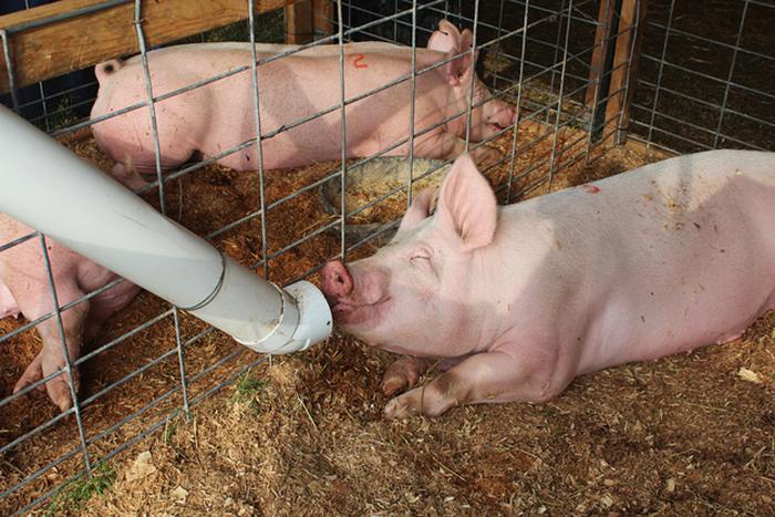Главные особенности кормления животных