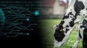 Искусственный интеллект уже прогнозирует производство молока