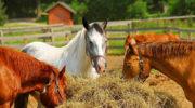 Корм для лошади