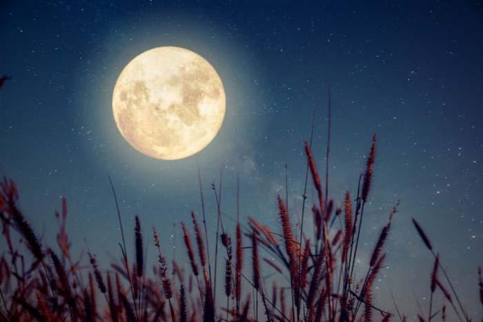 Лунный календарь садовода и огородника с 11 по 25 июня