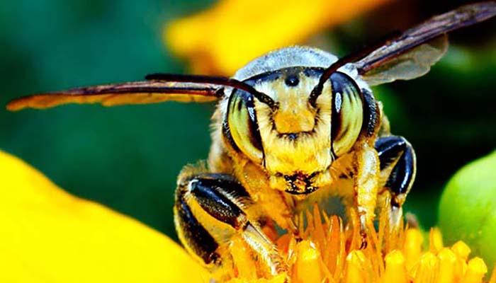 Описание пород пчел для Подмосковья