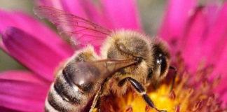 Пчел научили сопоставлять символы с числами и наоборот
