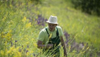 По паре в год: ученые подсчитали, что за 250 лет с Земли исчез 571 вид растений