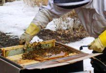 Подкормка пчел зимо