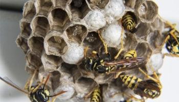 Причины вымирания пчёл