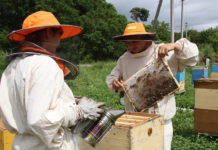 Разведение и содержание пчел