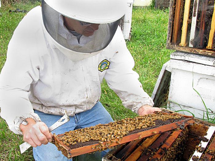 Разведение пчел для начинающих