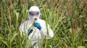 США облегчили регистрацию новых линий ГМО