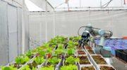 Ученые представили умную систему освещения для выращивания растений даже в темноте