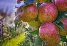 Верховный суд отклонил жалобу «Выбора» на изъятие у него незаконно приватизированных яблоневых садов в Воронеже