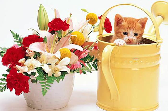 Все, что вы хотели знать о комнатных растениях и домашних животных
