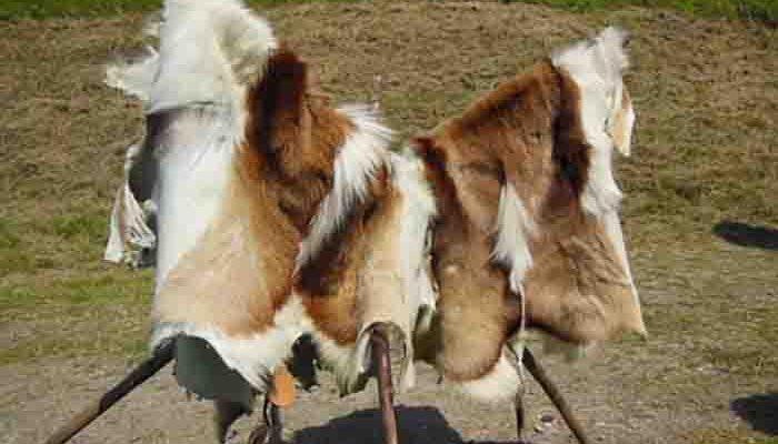 Выделка шкуры козы