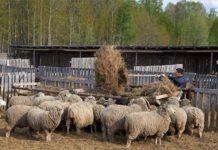 Забайкальцы предложили возродить подсобное хозяйство в школах