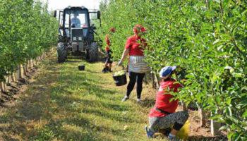 Зарплаты в сельском хозяйстве Крыма выросли за год на 13%