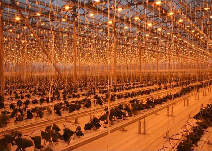 Правительство Алтайского края намерено продать крупнейший в Сибири тепличный комплекс Индустриальный