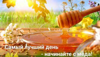 Самые лучшие сорта мёда