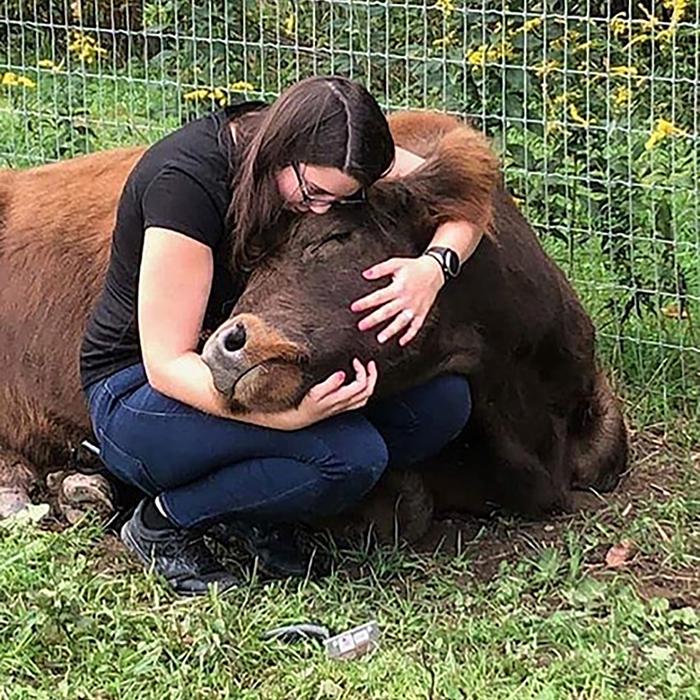 Американцы платят 75 долларов в час чтобы пообниматься с коровами