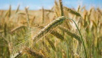Более двух млрд рублей господдержки получили кубанские аграрии с начала года