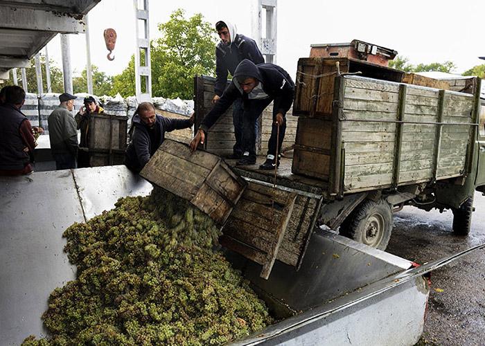 Грузинские фермеры паникуют: Куда нам деть столько винограда?