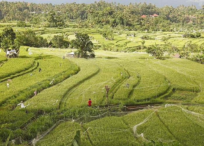 Индонезия потеряла часть суши размером со столицу за 15 лет