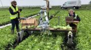 Инженеры создали робота Vegebot для уборки салата