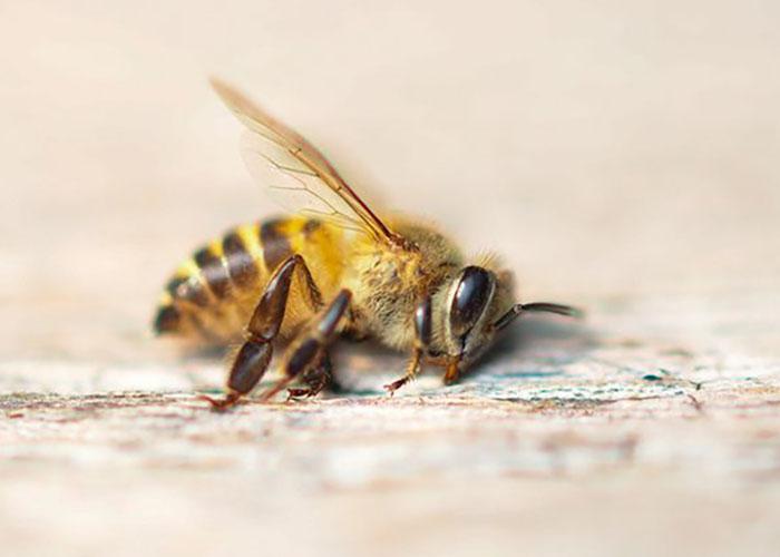 Катастрофы нет глава Минсельхоза Удмуртии прокомментировала массовую гибель пчел