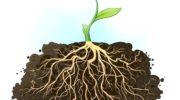 Новый ген поможет вывести растения для борьбы с глобальным потеплением