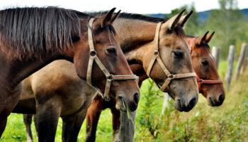 Под Волгоградом фермер за полгода не заметил кражу целого табуна лошадей