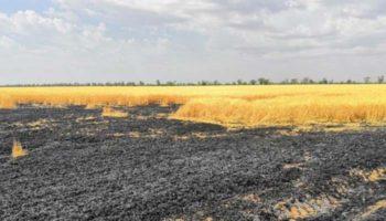 Поджог назвали основной причиной пожаров на полях Ставрополья