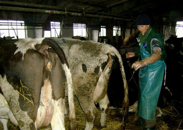 Понос у коров причины и лечение