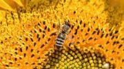 Потери экономики России от гибели пчел могут составить триллион рублей