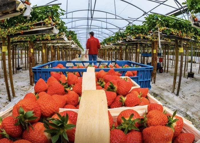 Сбербанк помогает расти одному из крупнейших аграрных хозяйств Волгоградской области
