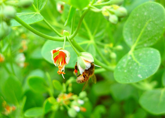 Самая лучшая порода медоносных пчёл