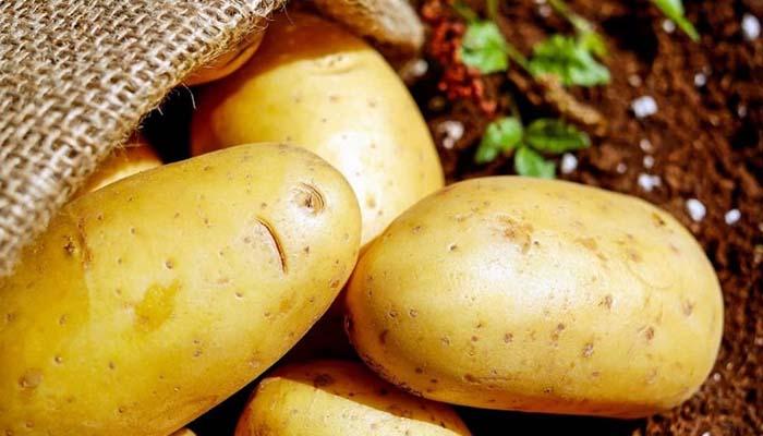 Собранного на Ставрополье картофеля хватит на 60 тысяч тонн чипсов