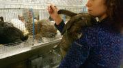 Супруги-фермеры пустили кроликов на котлеты