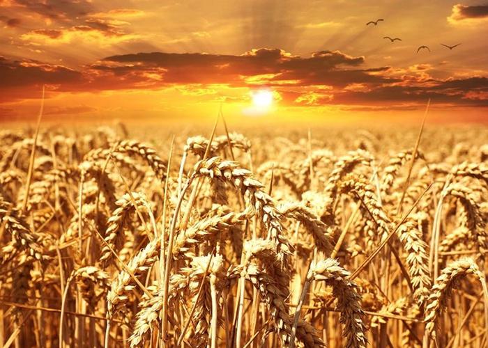 Украина собирается поставлять сельхозпродукцию в Китай