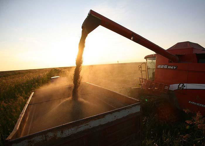 В России собрано 30,6 млн тонн зерна