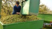 Виноградари получат государственную поддержку
