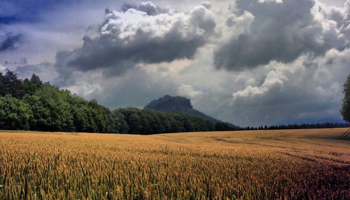 Из-за проливных дождей в Удмуртии погибли посевы на 24,6 тыс. га